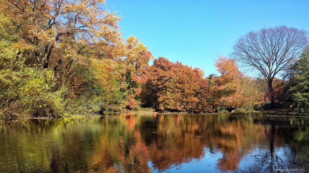 Prospect Park, Lullwater, Brooklyn, Fall, Autumn, New York City